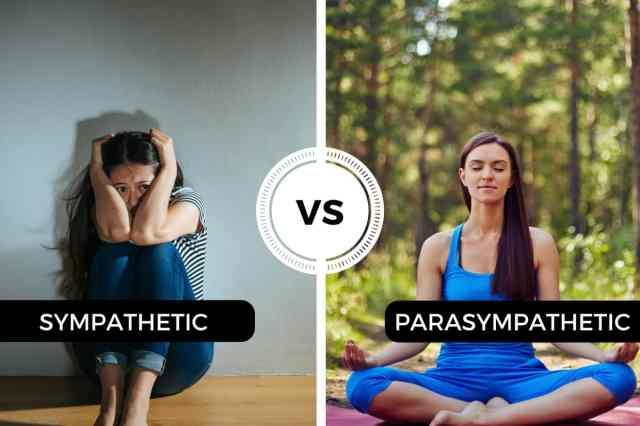 Sympathetic-vs-Parasympathetic